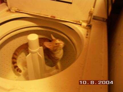 Hiro the kitten in the washing machine